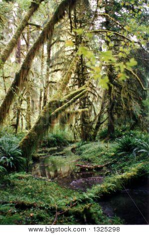 Hoh_Rainforest