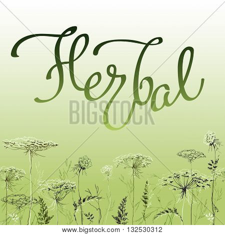 Calligraphy sign herbal on green background with decorative hand drawn border frame with herbs and grass. Herbal lettering for badges, banners, labels, bio products package and eco designs, vector.