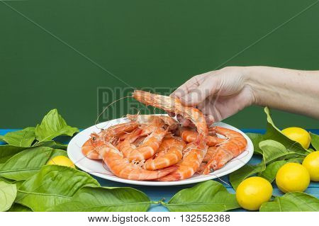 the hands show the prawn,  plate with prawns,  on green background