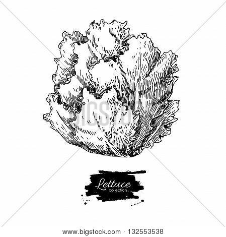 Lettuce hand drawn vector illustration. Vegetable engraved style illustration. Isolated Lettuce salad. Detailed vegetarian food drawing. Farm market product.