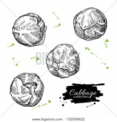 Brussel sprout hand drawn vector illustrations. Vegetable engraved style objects. Isolated brussel cabbage set. Detailed vegetarian food drawing. Farm market product.
