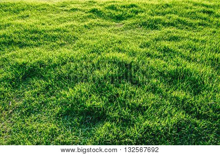 Spring summer nature background with shiny grass