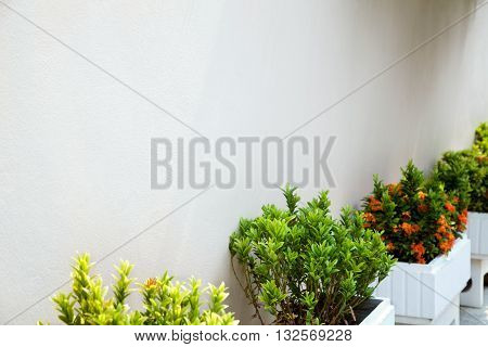 Row of flower beds with green small bushes and white wall in a park. Landscaping garden background with copy space