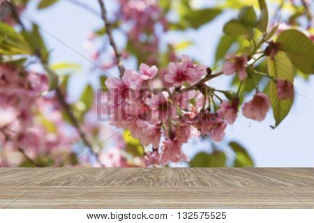Wooden Table For Display Or Montage Your Product With Blur Background Of Sakura Flower On Wild Himal