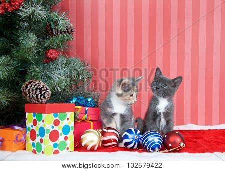 Calico and gray and white kittens next to a christmas tree with presents and ornaments strewn around the floor on red fuzzy floor striped red and off white background