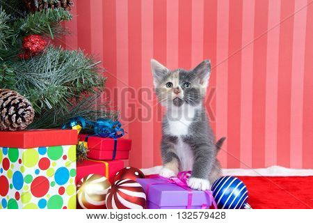 Calico kitten next to a christmas tree with presents and ornaments strewn around the floor on red fuzzy floor striped red and off white background