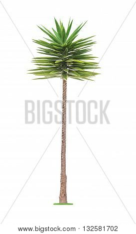 Green young beautiful palm tree isolated on white background