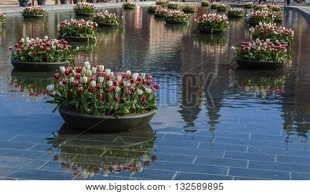 Fountain with flowerbeds of tulips in Amsterdam Netherlands