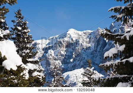 Fir And Mountain