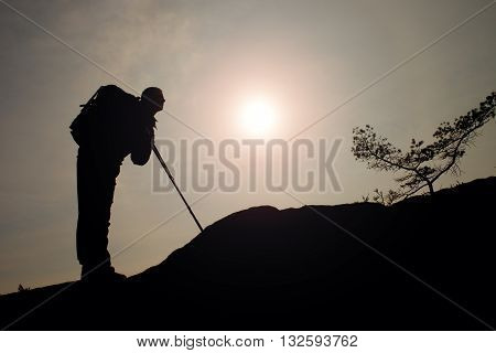 Man Hiker With Trekking Poles Stand On Mountain Peak Rock. Small Pine Bonsai Tree Grows In Rock, Spr
