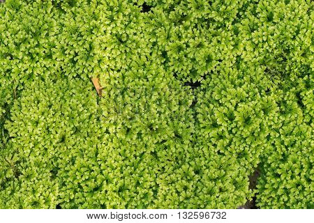Plants also called green plants are multicellular eukaryotes of the kingdom Plantae