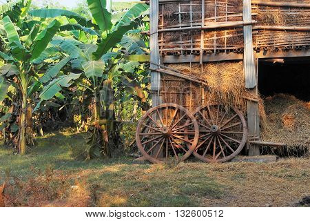 wooden barn, old wheels and banana trees