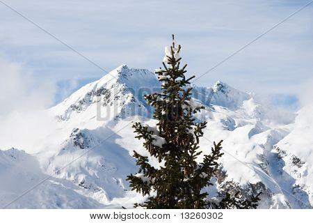Fir And Mountain