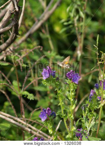 ¿A qué velocidad vuela en violetas flores rurales de mariposa