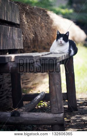 vertical photo of a black and white cat sitting and sleeping on a wooden rural bench near a fence