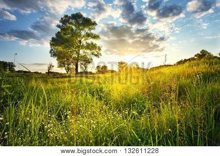 Field with flowers and a tree at sunset
