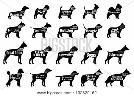 Vector dog breeds silhouettes collection isolated on white. Dog icons collection for cynology pet clinic and pet shop. Dog breeds names and personality description