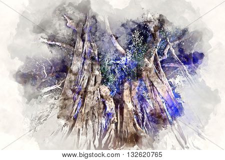 Giant rubber trees in the Plaza Gabriel Miro in Alicante city Spain. Digital watercolor painting