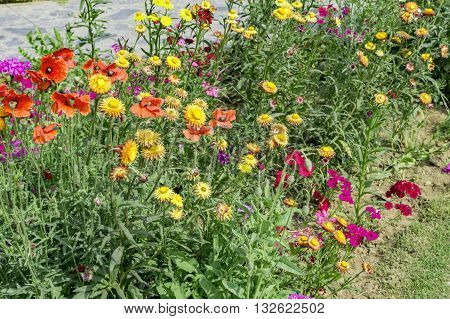 Various Flower Plants On The Roadside