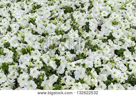 White flowers with green plants and leaves.