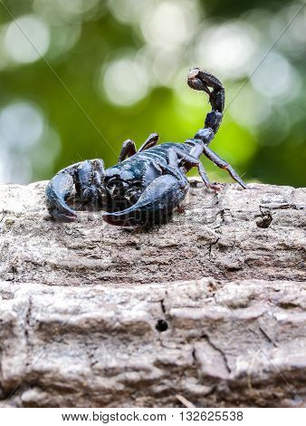 Closeup view of a scorpion in nature.