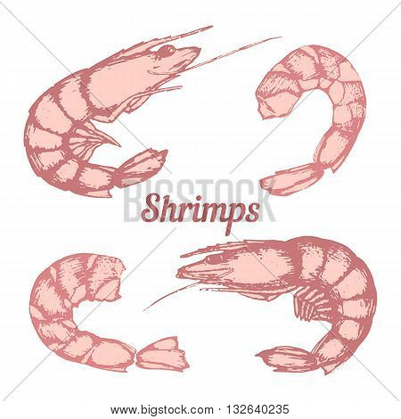 Set of different shrimps peeled shrimp hand-drawing line art. Vector.