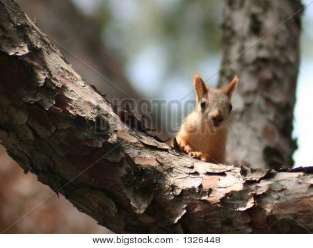 Shoot Me! (Squirrel)