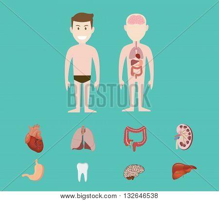 human anatomy organ heart lunge kidney brain tooth gastric liver vector graphic illustration