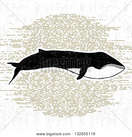 Hand drawn textured icon with fin whale vector illustration.