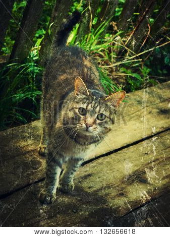 Single homeless cat. Photos in a grunge style.