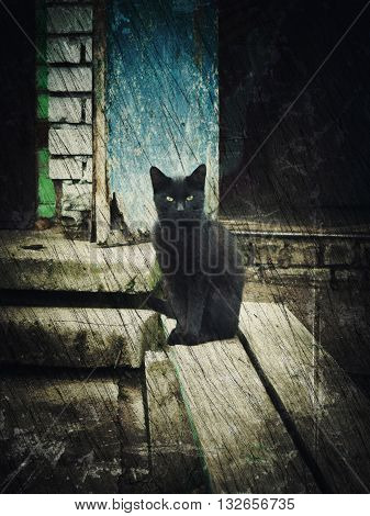 Single homeless black cat. Photos in a grunge style.