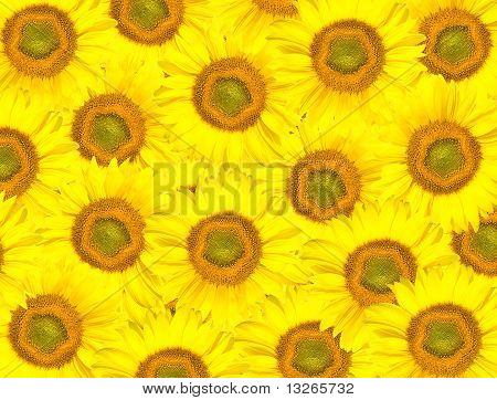 background From Sunflowers