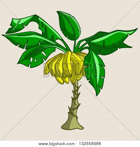 cartoon palm banana tree with fruits bananas