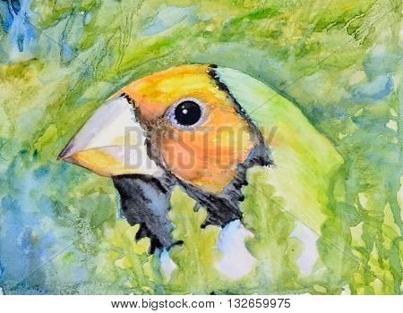 Original watercolour portrait painting of an orange head Gouldian finch.