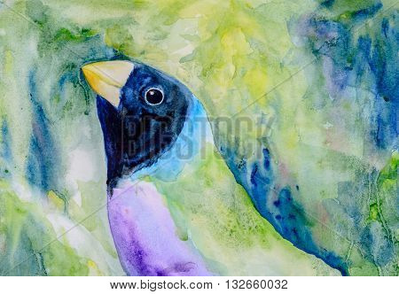 Original watercolour portrait painting of a black head Gouldian Finch