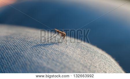 The bite of a mosquito on human body through the fabric on the leg