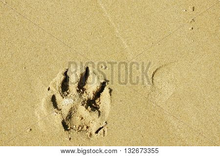 Sunny day near Baltic sea. Dog footprint.