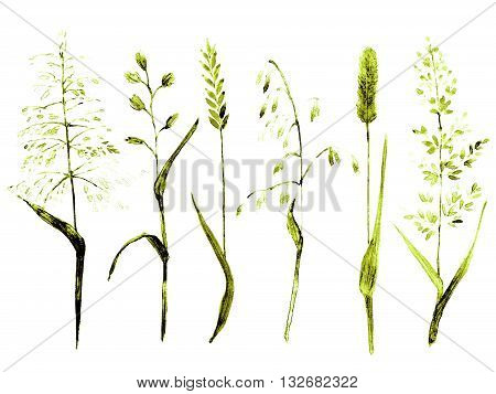 Hand drawn watercolor ilustration. Meadow grass types in high contrast green colors. Set of plants for ecological nature design elements.