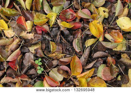 Rotten Autumn Foliage