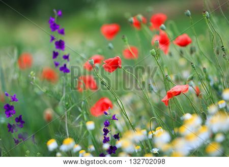 Abstract image of a field with spring flowers