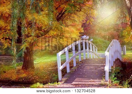 Autumn in a park in Amsterdam, Netherlands. Seagulls sitting on the wooden bridge.