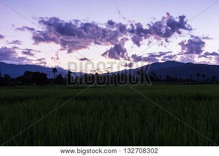 rice fields with mountain , agriculture in Thai