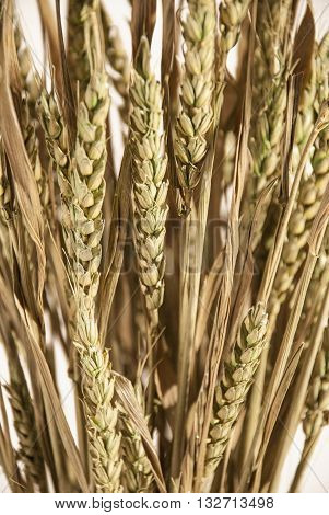 Dried Wheat decoration on a white background.