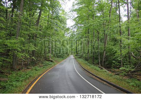 A road through the woods known as Pierce Stocking Scenic Drive, Sleeping Bear Dunes National Lakeshore, Michigan