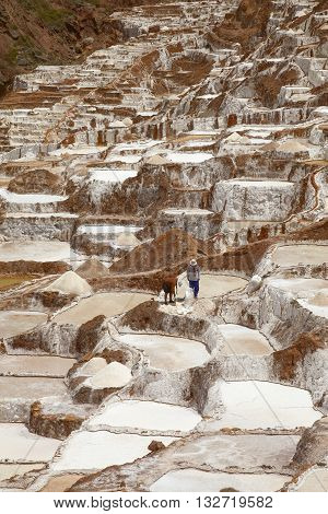 MARAS PERU-NOVEMBER 26 2011: Two people working together at Salina de Maras the traditional inca salt field in Maras near Cuzco in Sacred Valley Peru