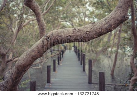 Mangrove Forrest (thung Prong Thong)