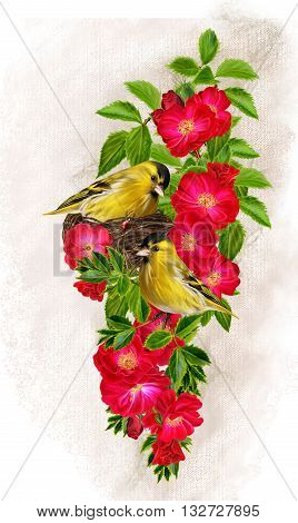 Two little yellow bird. A bird in the nest. The branch of red roses. floral background. old style.