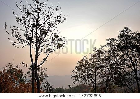 Sunlight through the dry trees on the mountain