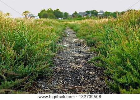 trail dirt path with grass goes into the distance very soft focus