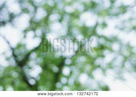 defocused bokeh background of big apple tree against blue sky, backdrop